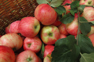 dozen red apples piled with green leaves on brown wicker basket