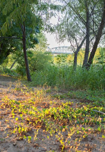 Glimpse of metal bridge in the distance behind green grasses and trees