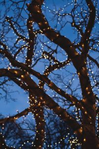 white lights on branches of tree with deep blue sky behind